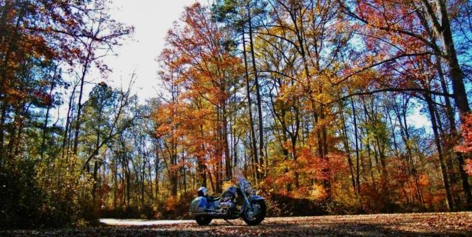 sumter-national-forest-2- Route Photo